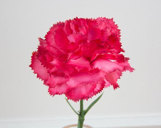 Dekoratif Yapay Çiçek - Koyu Pembe Karanfil