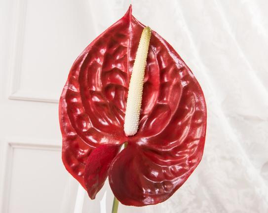 Dekoratif Yapay Çiçek Kırmızı Flamingo Çiçeği 70cm