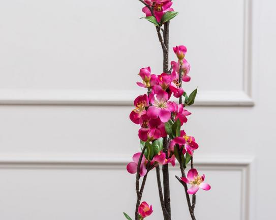 Betta Şeftali Çiçeği