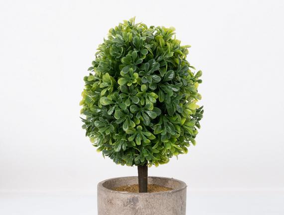 Saksılı Bitki 14x14x27cm