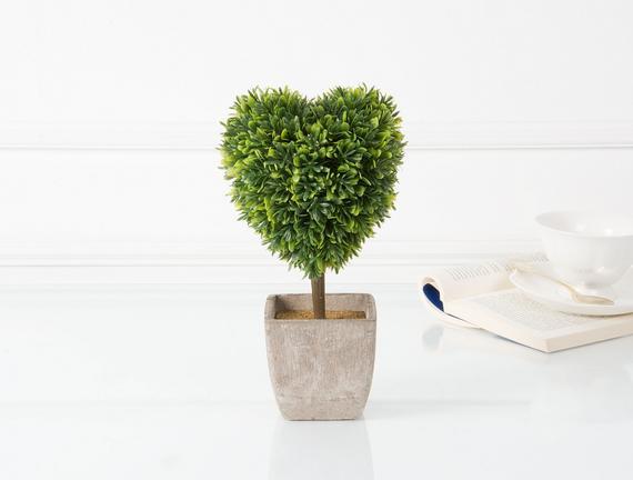 Dekoratif Saksılı Bitki