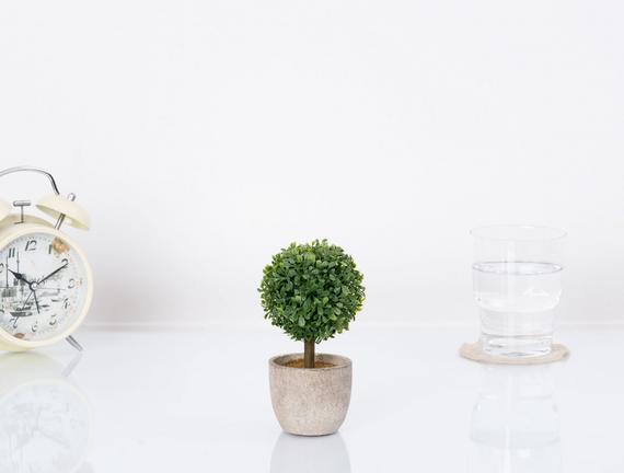 Saksılı Bitki 8x8x15cm