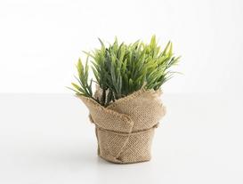 Saksılı Bitki 15X15X15cm