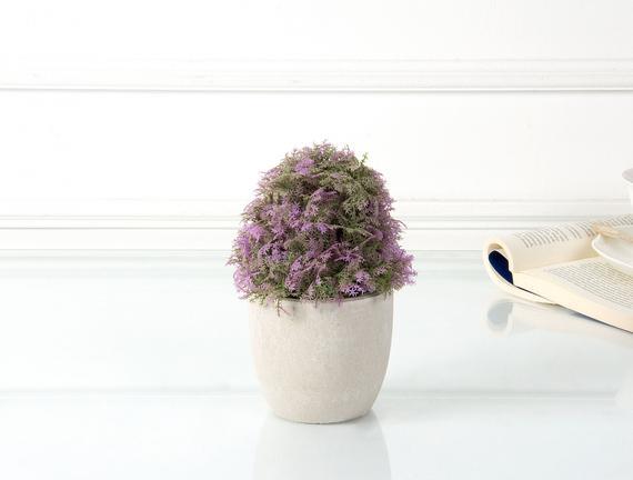 Dekoratif Saksılı Bitki 12x12x18cm