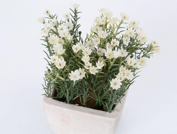 Saksılı Bitki 11x11x14cm