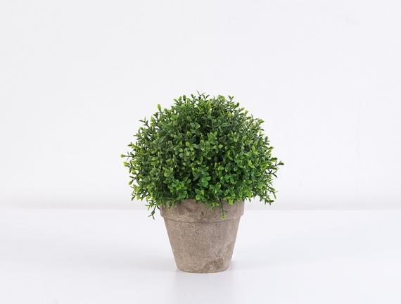 Saksılı Bitki 18 x 18 x 24cm