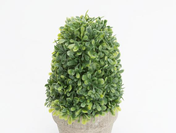 Saksılı Bitki 7 x 7 x 15cm