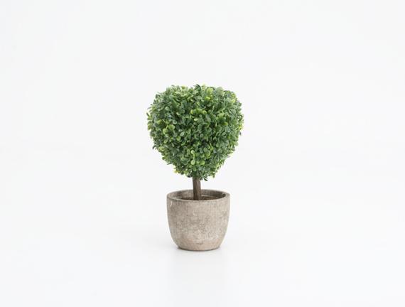 Saksılı Bitki 10 x 10 x 16cm