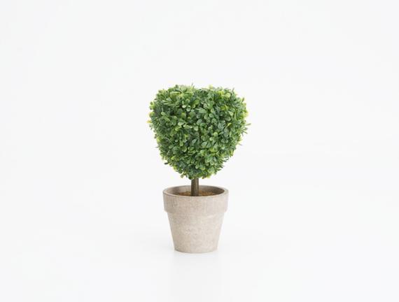 Saksılı Bitki 11 x 7 x 17cm