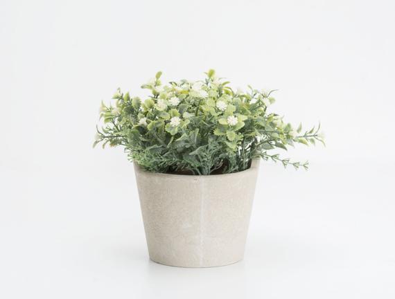 Saksılı Bitki 15 x 15 x 16cm