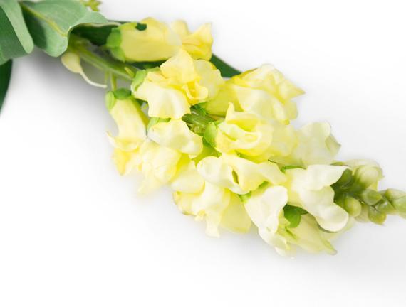 Dekoratif Yapay Çiçek - Sarı Çiçekli Aslanağzı
