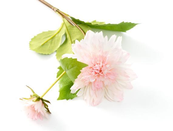 Dekoratif Yapay Çiçek - Beyaz Yıldız Çiçeği