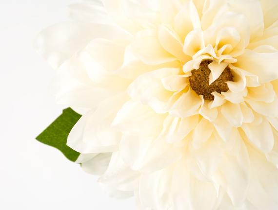 Dekoratif Yapay Çiçek - Krem Yıldız Çiçeği