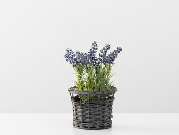 Saksılı Bitki - Lavanta