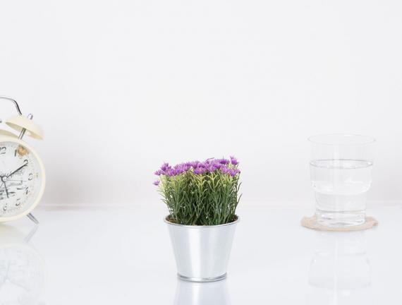 Saksılı Bitki
