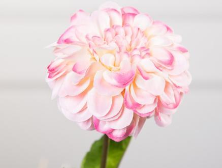 Betta Gerbera Çiçek - Pudra