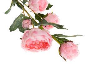 La Bambola Peony Bouquet - Pink