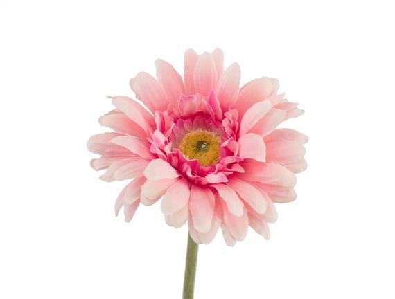 Betta Gerbera Çiçek - Pembe