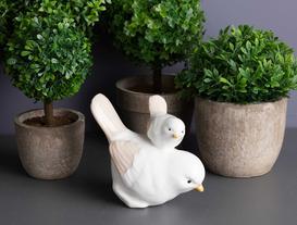 Biblo Kuş - Yavru Güvercin