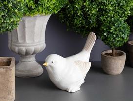 Biblo Kuş - Güvercin