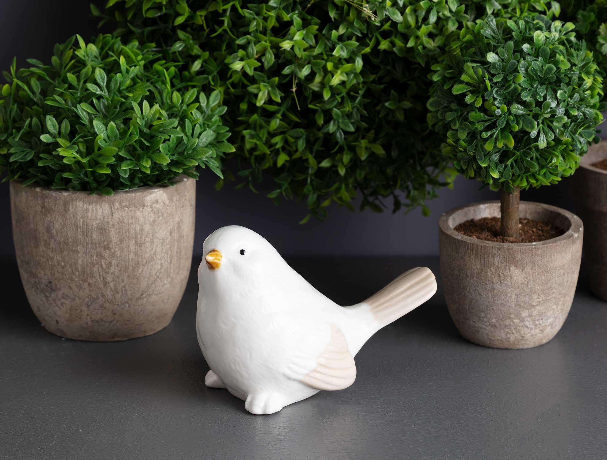 طائر للزينة