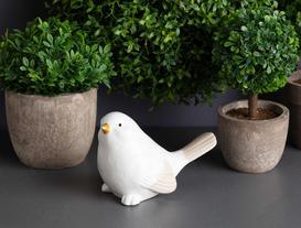 Biblo Kuş - Baby Güvercin