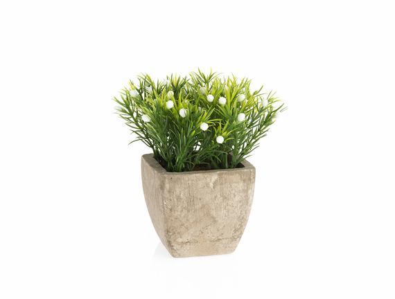 Paniculata Saksılı Bitki