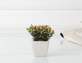 Jolie Saksılı Bitki