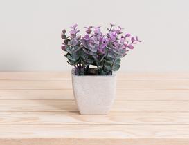Sukulent Saksılı Bitki