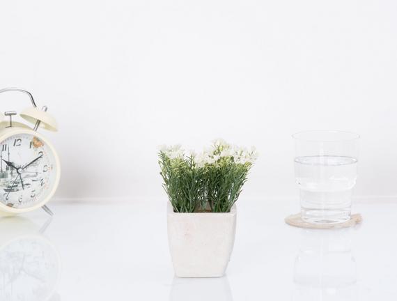 Blanc Saksılı Bitki
