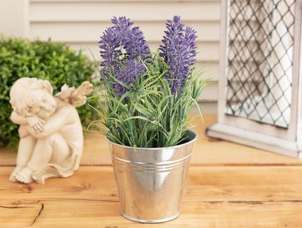 Lemme Lavanta Patine Saksılı Çiçek - Mor
