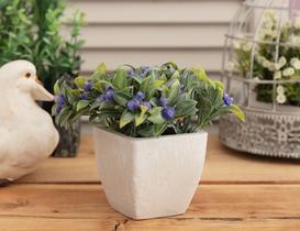 Violet Saksılı Bitki