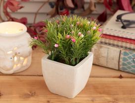 Minion Rose Saksılı Bitki