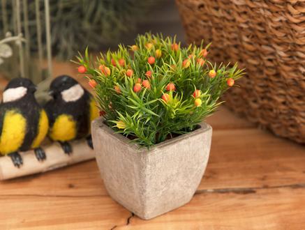 Coloré Saksılı Bitki