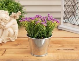 Lely Lavanta Saksılı Bitki