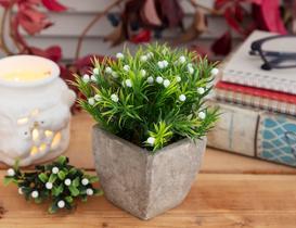 Floraison Saksılı Bitki - Beyaz