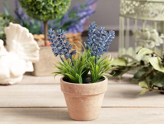 Lemme Lavanta Saksılı Çiçek - Mor