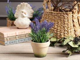Lemme Lavanta Saksılı Çiçek