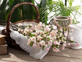 Şeftali Baharı