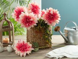 Betta Yıldız Çiçeği - Pembe