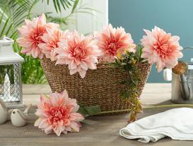 Betta Yıldız Çiçeği - Pudra