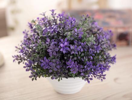 Elanie Saksılı Bitki