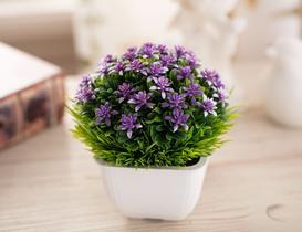 Reine Saksılı Bitki - Mor