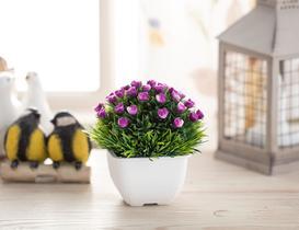 Belle Saksılı Bitki - Mor