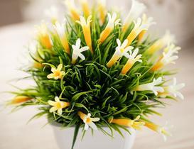 Hedvige Saksılı Bitki - Sarı