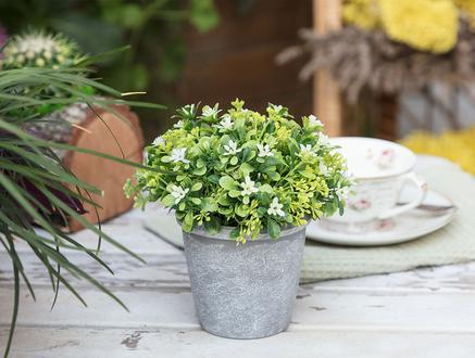 Rennie Saksılı Bitki - Beyaz