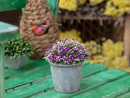 Darcy Saksılı Bitki