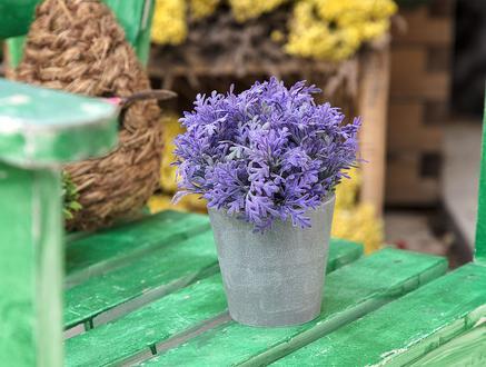Lucille Saksılı Bitki