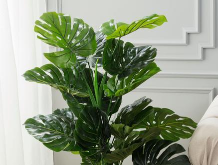 Arbre Saksılı Çiçek - Yeşil