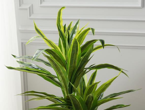 Jonquille Saksılı Çiçek - Yeşil